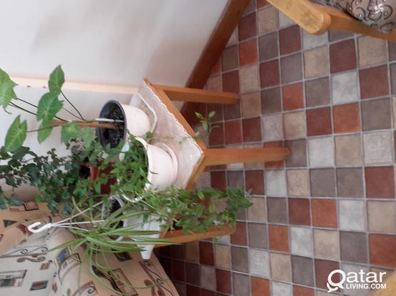 Indoor Plants in Mesaieed